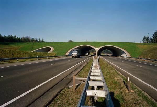 Ecoduct Woeste hoeve