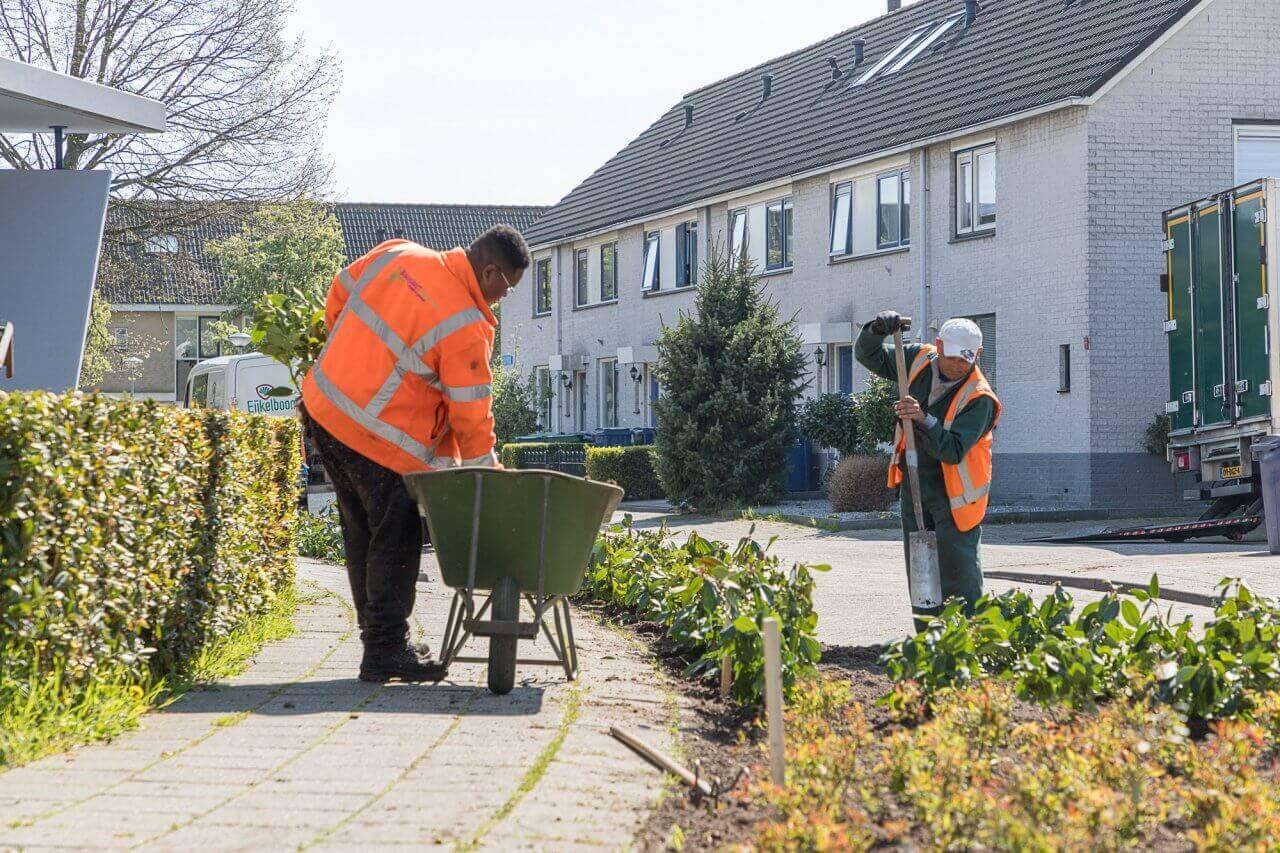 boogaart-almere-groen-en-recreatie-Almere-onderhoud-2018-1-2000x1333