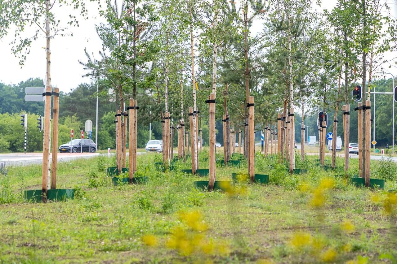 eijkelboom-apeldoorn-boom-Gemeente-Apeldoorn-N304-2020-1-2000x1333
