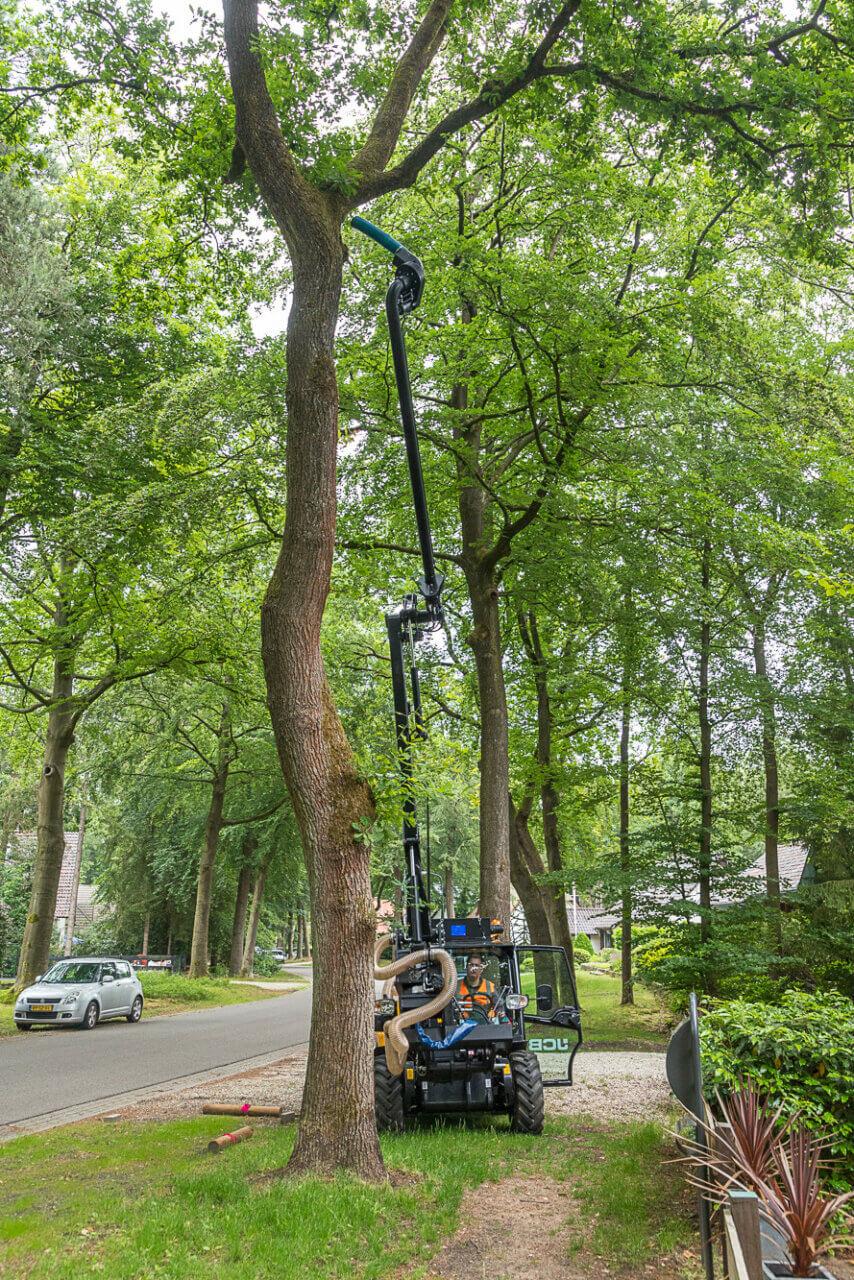 eijkelboom-apeldoorn-boom-Gemeente-Apeldoorn-eikenprocessierups-2019-4-889x1333