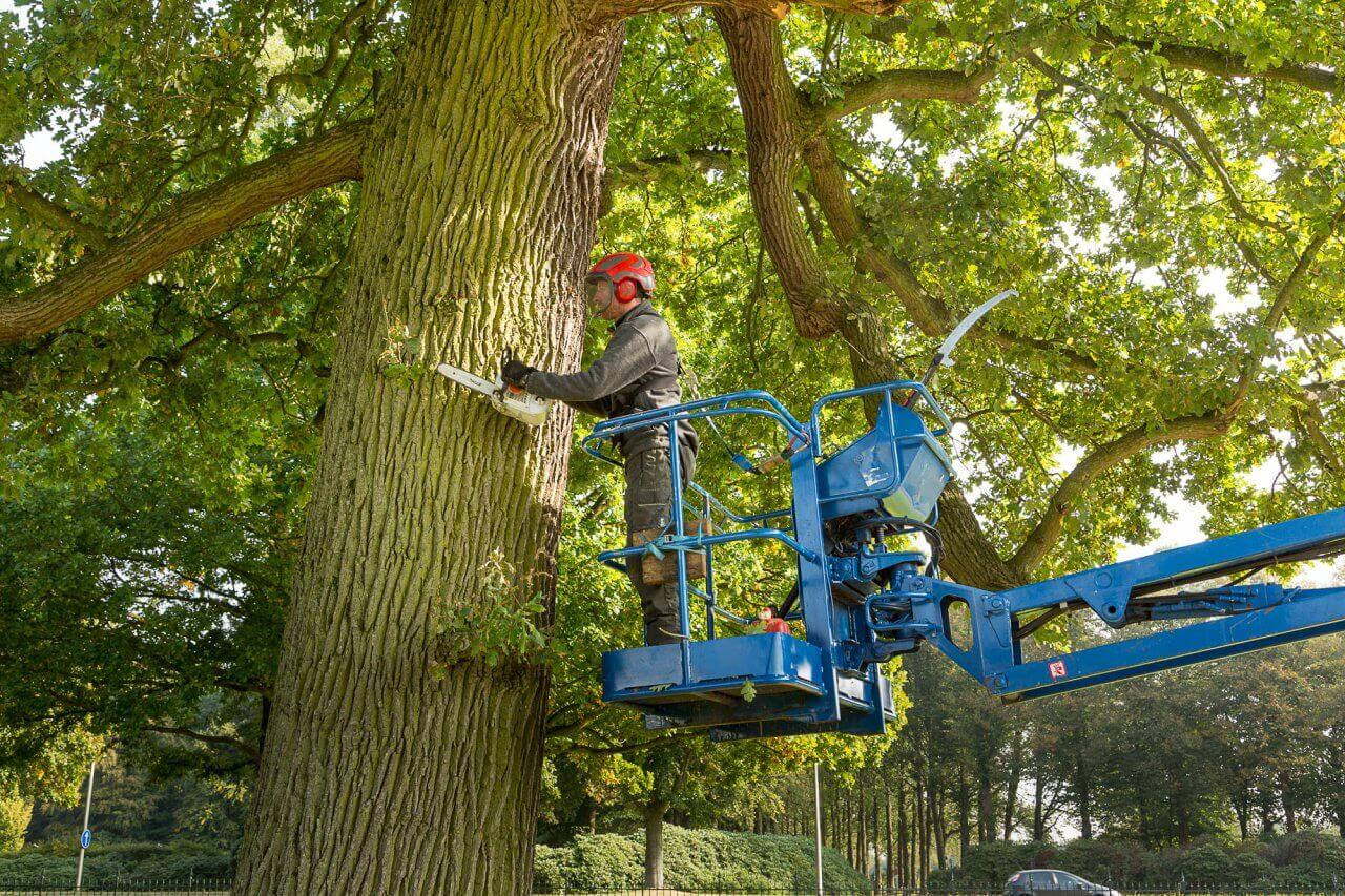 eijkelboom-apeldoorn-werkzaamheden-soestdijk-2016-1-2000x1333