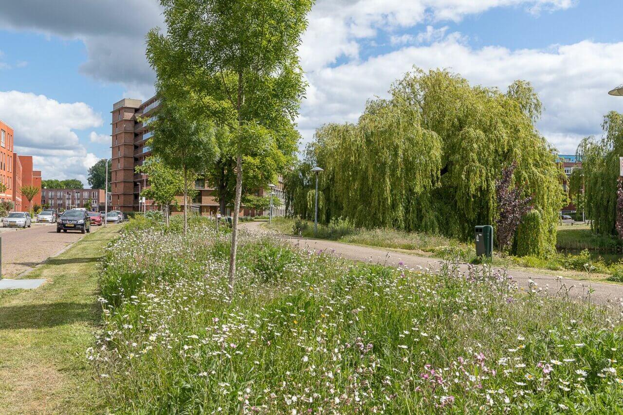 eijkelboom-utrecht-groen-en-recreatie-Gemeente-Utrecht-bloemenlint-2018-1-2000x1333